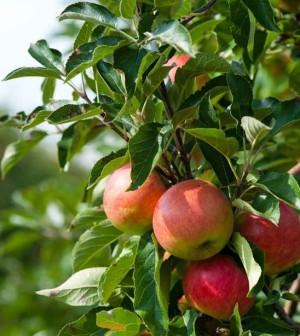 apples-300x336